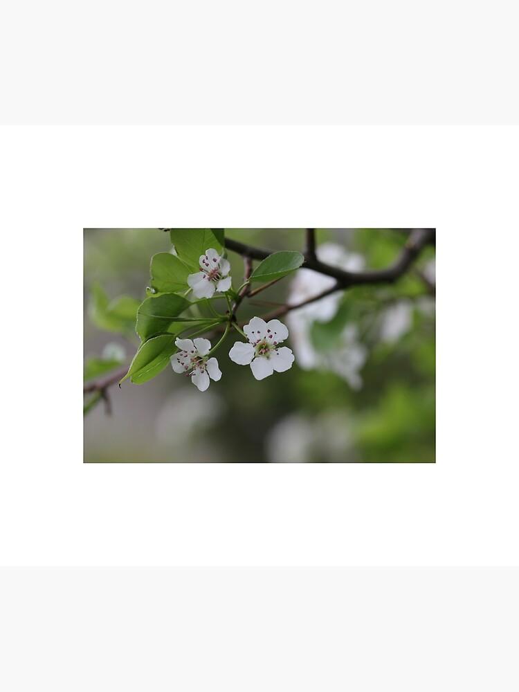 Sakura - 1 by thepurplelilac