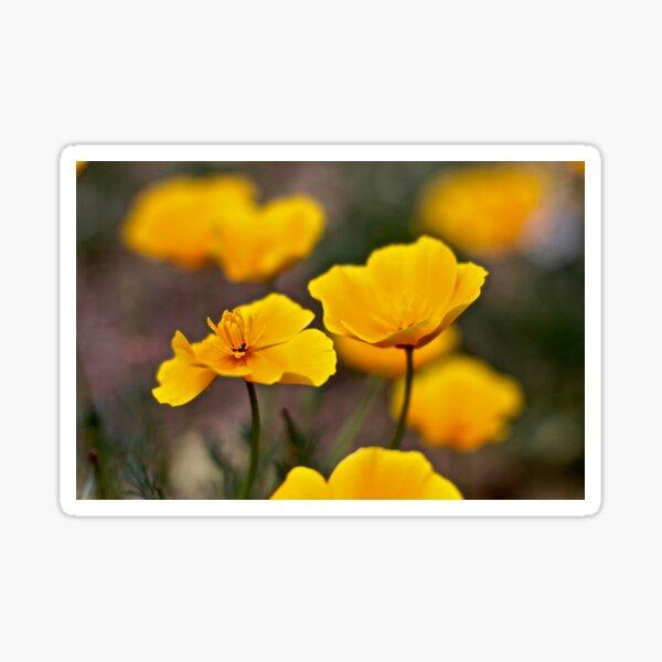 Golden Poppies Sticker