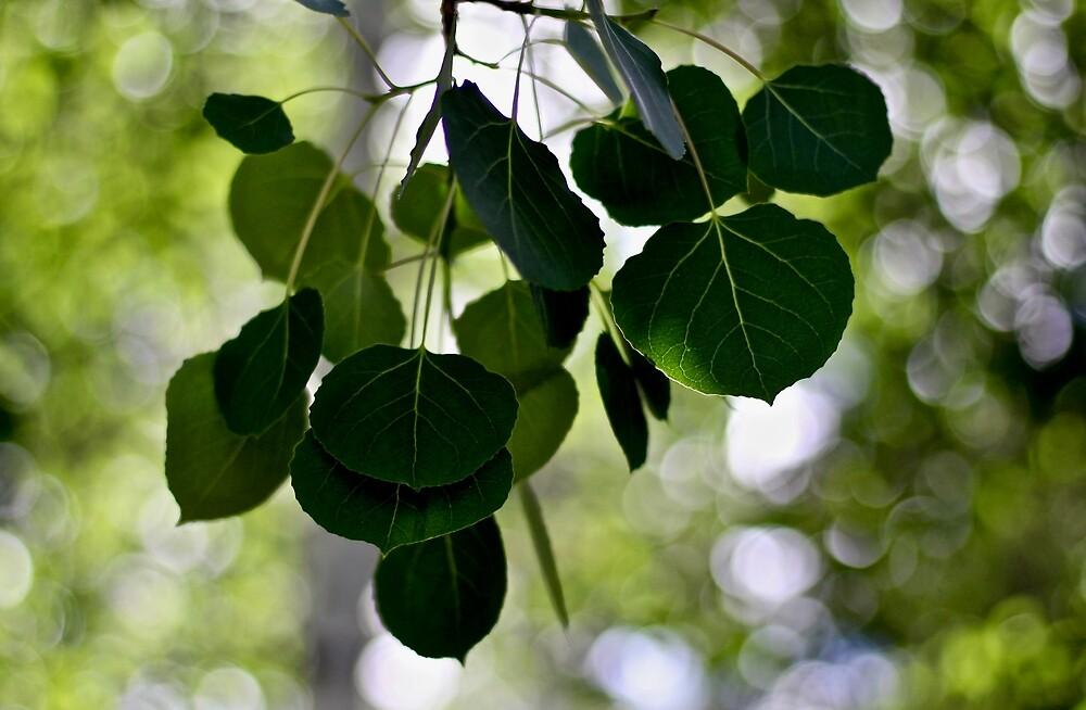 Aspen Leaves by quantumnatura