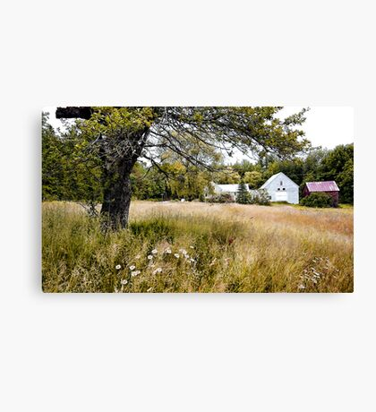Summer at The Farm on Cushman Pond Road Canvas Print