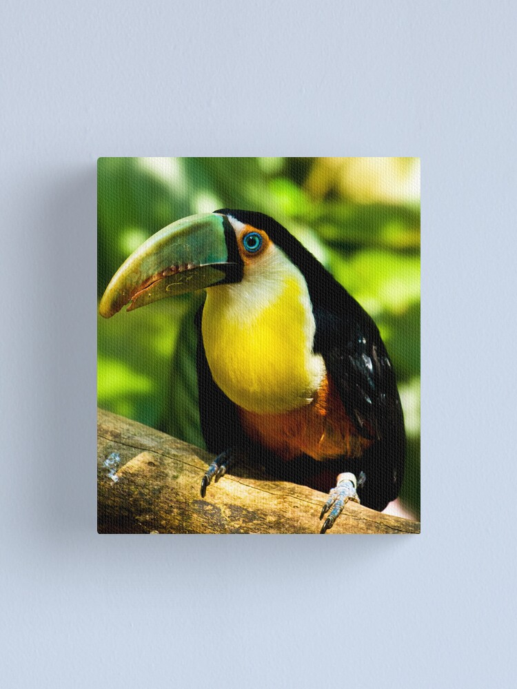 Alternate view of A nice toucan Canvas Print