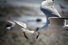 ~Gull Dreaming~ by Lynda Heins