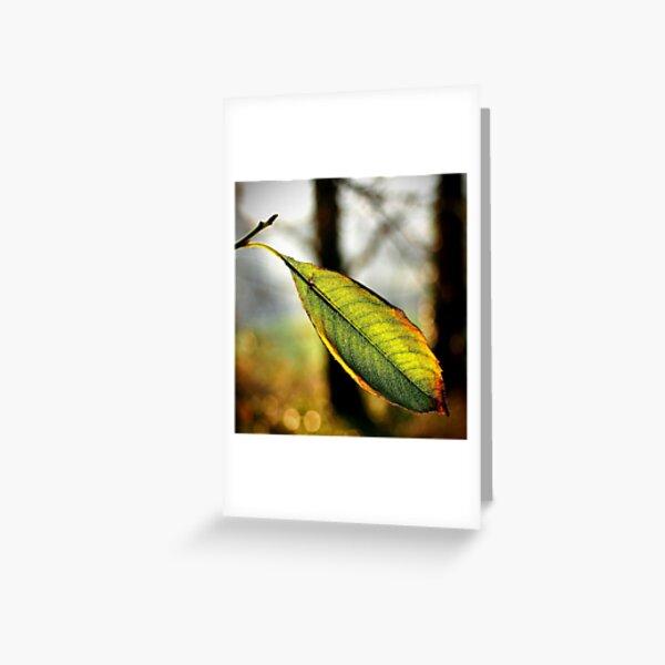 Autumn fade Greeting Card