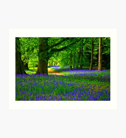 Bluebell Wood - Thorpe Perrow #3 Art Print