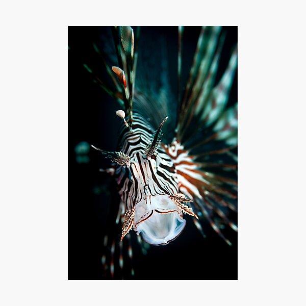 Yawning lionfish  Photographic Print