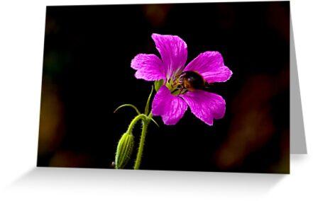 Foraging Bee #1 by Trevor Kersley