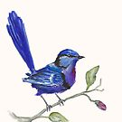 Splendid fairy-wren by Marie Magnusson