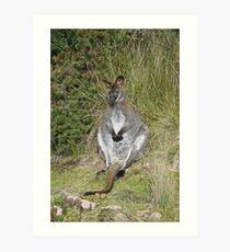 Relaxing wallaby Art Print