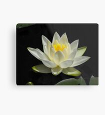 Water Lily From A Canoe Metal Print