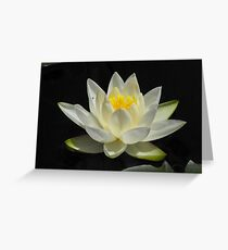 Water Lily From A Canoe Greeting Card