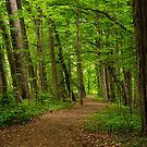 Sacred Grove Path by Sam Scholes