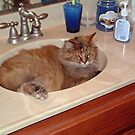 A Sink Full Of Cat by Chere Lei