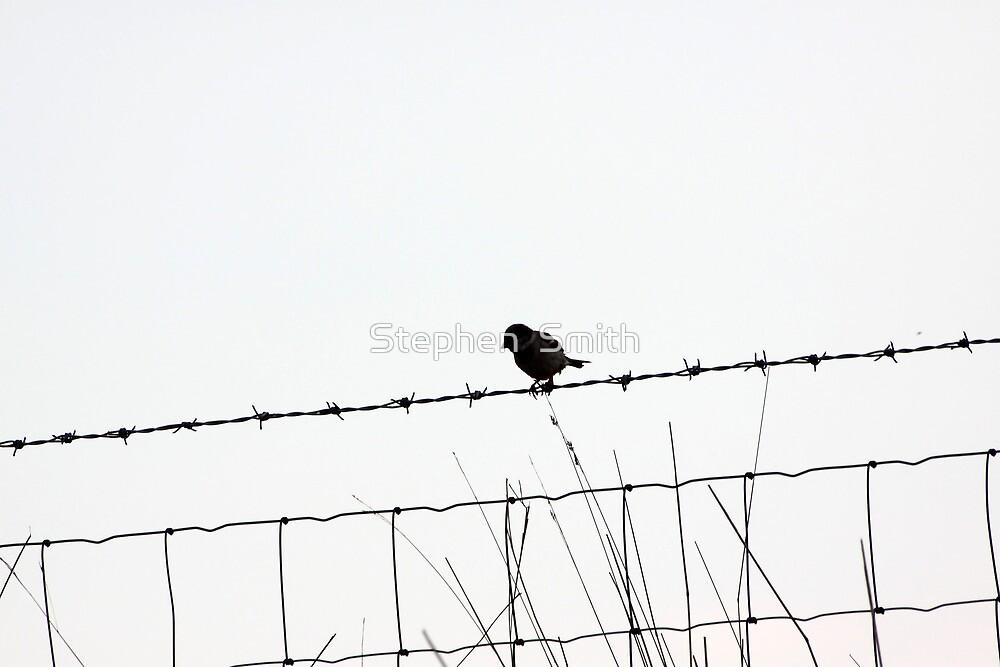 Freedom by Stephen  Smith