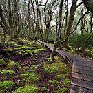 Wilderness - Tasmania by Michael Treloar