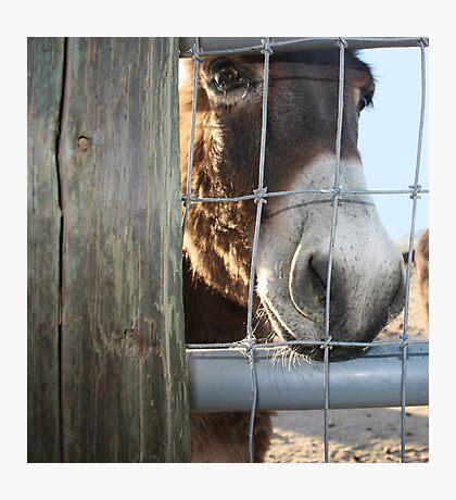 Take me home....please? Photographic Print