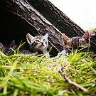 Kittens by digisenj