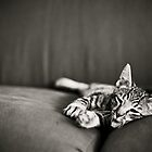 Tiger Kitten - Lazy Afternoon by cabrilphoto