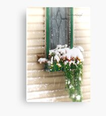 Snow Covered Flowers Canvas Print
