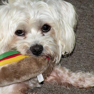 Oscar has a Hot Dog       by posyrosie