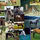 Skyhorse Collage by skyhorse