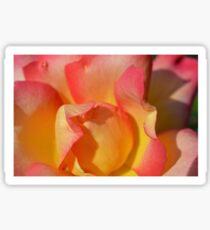 Pink Rose Close-Up Sticker