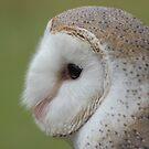 Fluffy face - barn owl profile by Jenny Dean