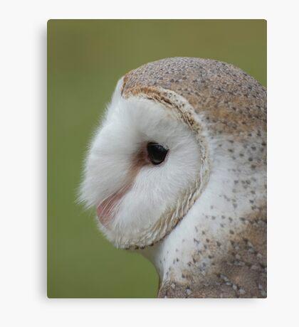 Fluffy face - barn owl profile Canvas Print