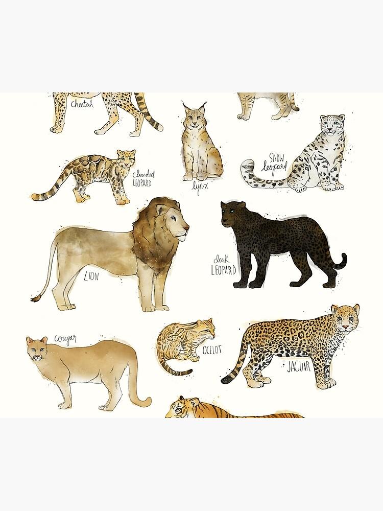 Gatos salvajes de AmyHamilton