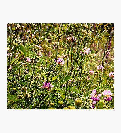 Field o Flowers Photographic Print