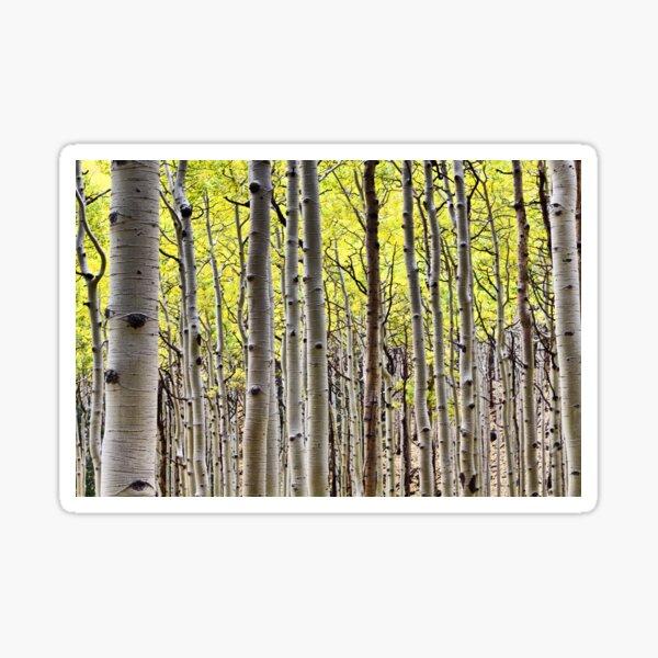 Aspen Forest  Sticker