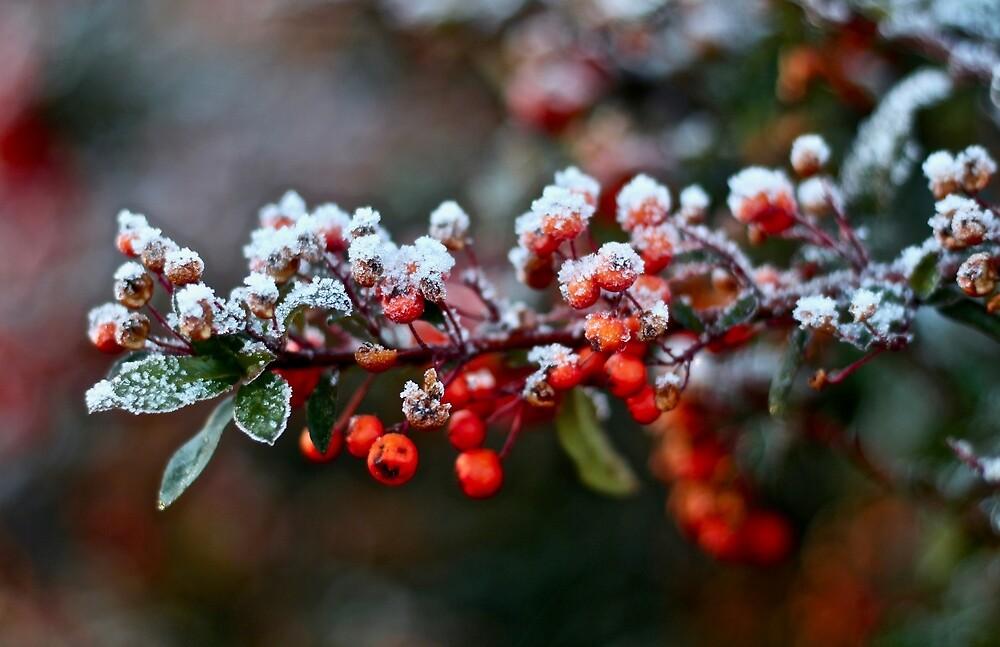 Winter's Kiss by quantumnatura