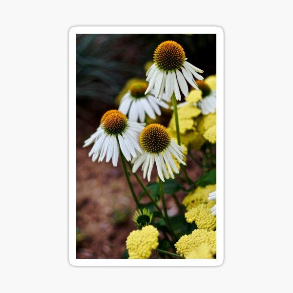 Cone Flowers Sticker