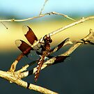 Dragonfly by Dave & Trena Puckett