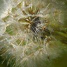 The Queen Of Meadows by DAntas