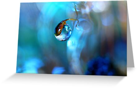 Moss in Blue by Sharon Johnstone