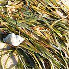 Seashell on the Seashore by BShirey