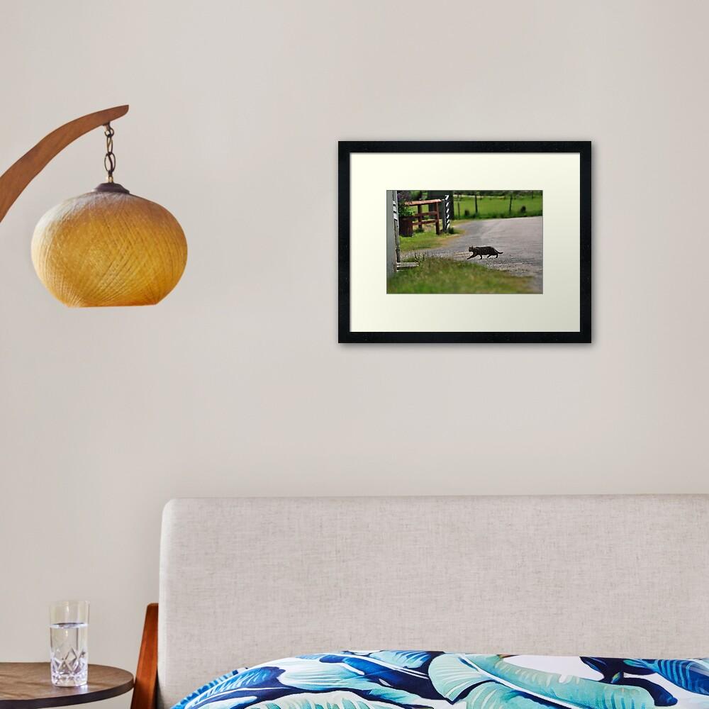 Cat-Dash Framed Art Print