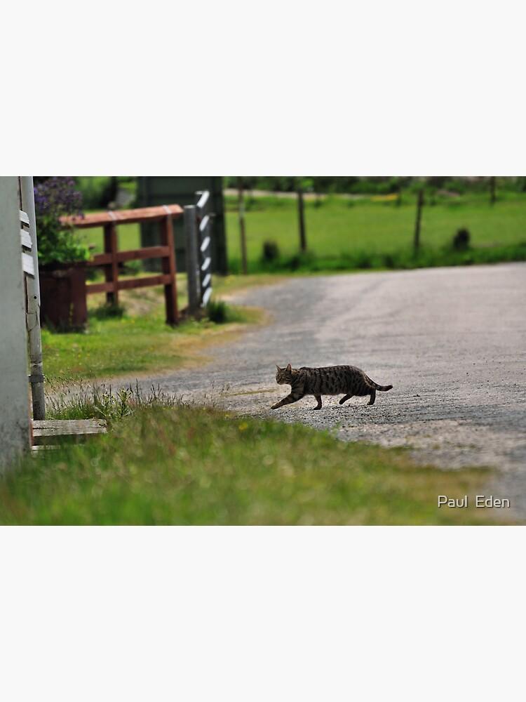 Cat-Dash by pauleden