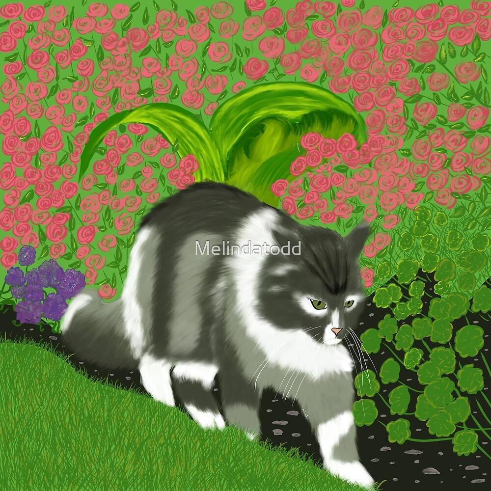 Cat In The Garden by Melindatodd
