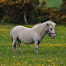 Horse 1 by Paul  Eden