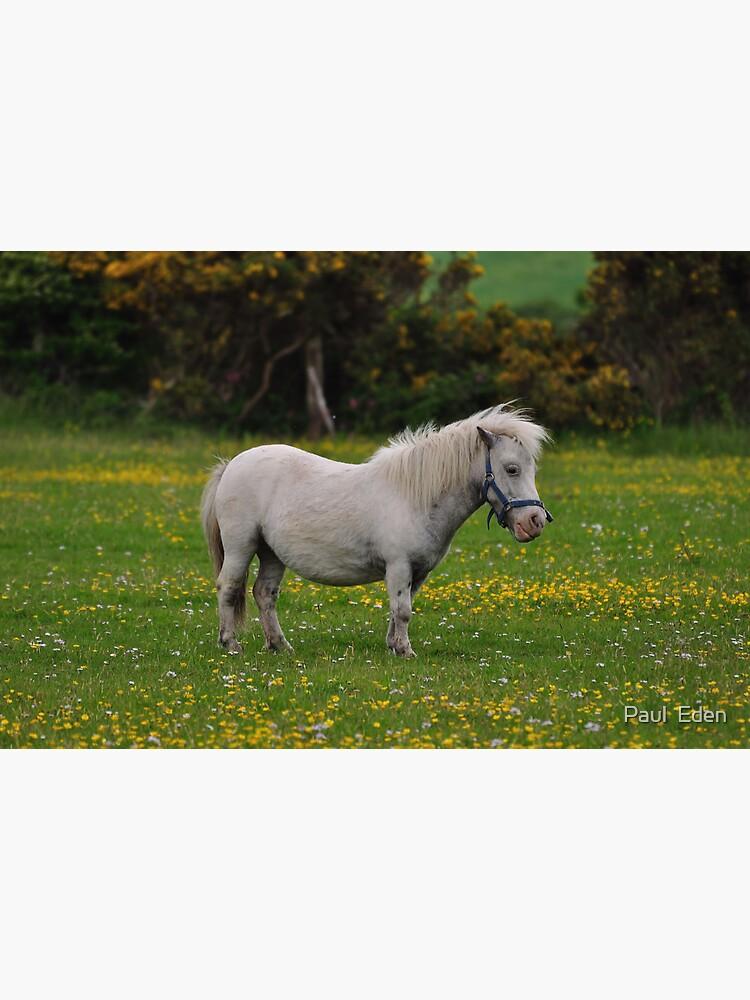Horse 1 by pauleden