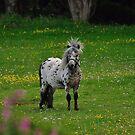 Horse 2 by Paul  Eden