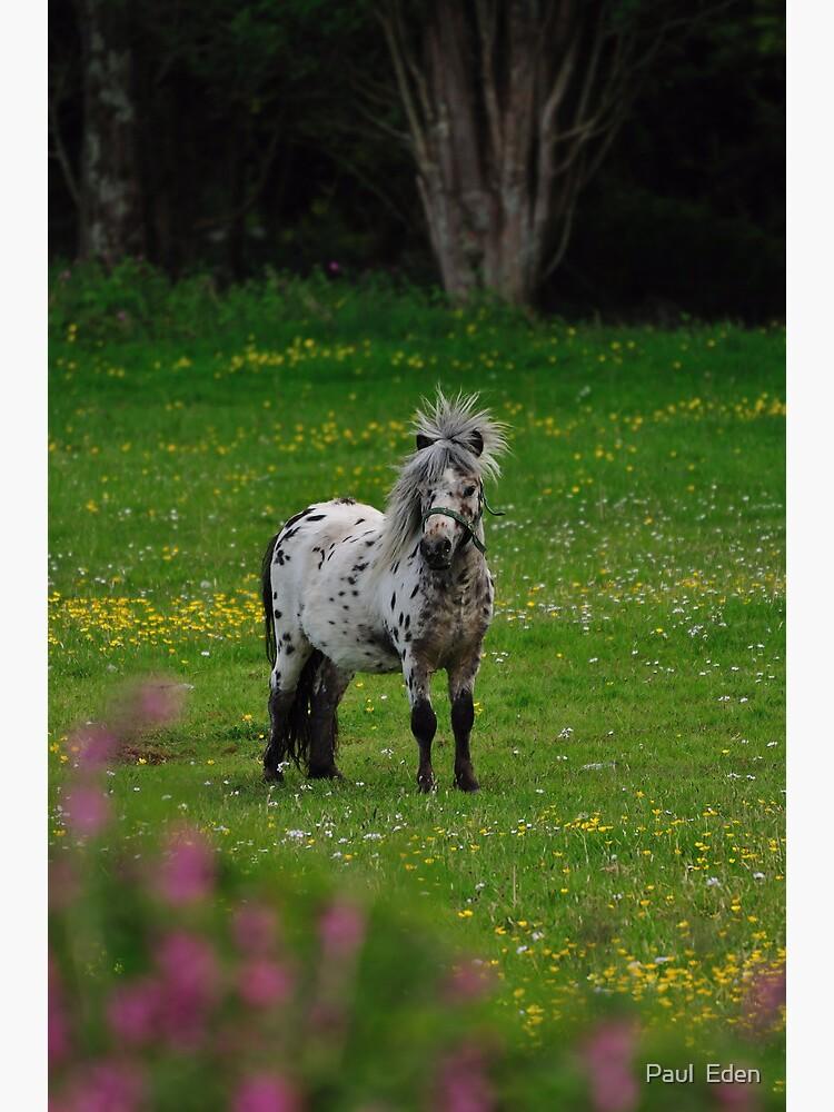 Horse 2 by pauleden