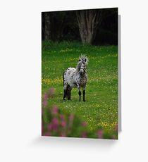 Horse 2 Greeting Card