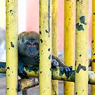 Temple Monkey by Bad Monkey Photography