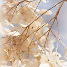 Die Hortensieblüten des letzten Herbstes von MotherNature
