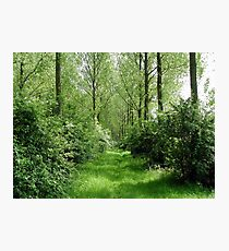 Littleport river trees Photographic Print