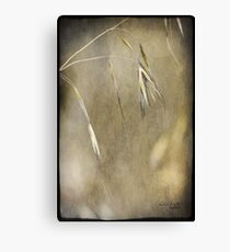 Blooming and seeding  Canvas Print