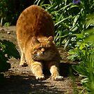 Waking cat by turniptowers