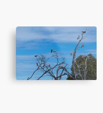 Galah Party Metal Print